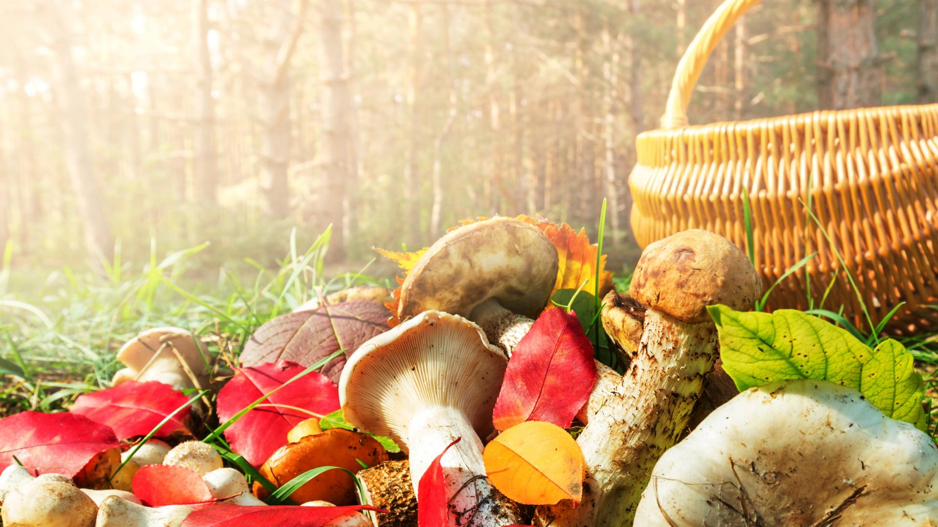 Kopia 04 października 2020 Start 10_00 -11_00 Rodzinne grzybobranie znagrodami (1)